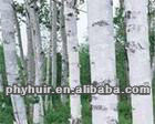 high quality birch bark extract/ Betulin