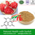 Low price Pomegranate 40% Ellagic acid