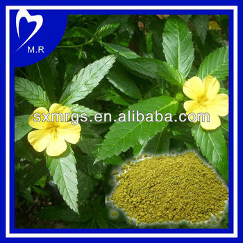 Factory Supply damiana leaf powder