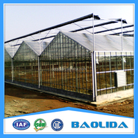 Venlo Type Greenhouse Covered By Tempered Glass For Vegetables /Flowers/Hydroponic