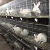 Rabbit farming cage/welded rabbit cage wire mesh/rabbit cage layers