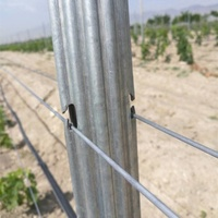 Vineyard Accessories Metal Grape Trellis Post