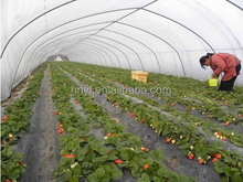 black mulching film for strawberries