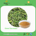 Manufacturer Provide Green Tea Extract