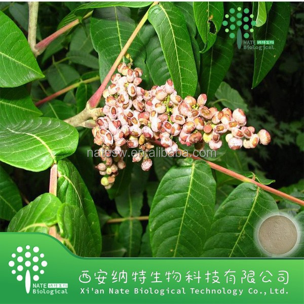 Factory supply Chinese gallnut powder extract