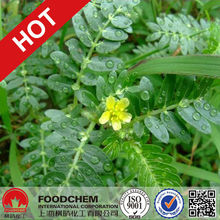 Tribulus Terrestris Extract Powder 70% Saponins