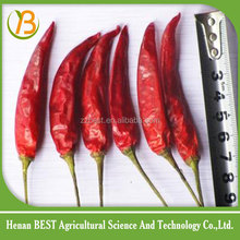 Red cayenne pepper spicy/hot chili pepper