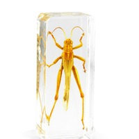 Wholesale Acrylic Resin Real Insect Large