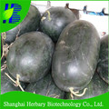 Hot sale black giant watermelon seeds for planting