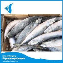 Frozen Style Whole Fresh Pacific Mackerel Fish Product With Competitive Price