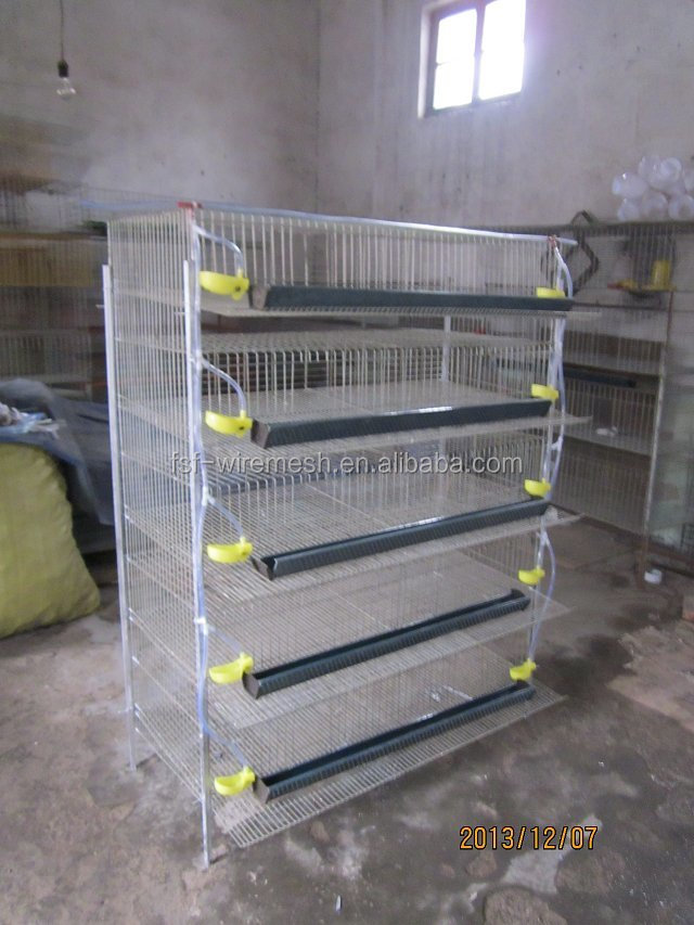 commercial quail layer cage / feeding system for sale