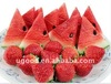 customized/odm fruit watermelon usb flash drive