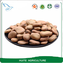 Sale Dried Broad Beans/Fava Beans / Dried broad beans bulk dry fava beans