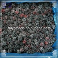 Wholesale Frozen IQF Mulberry Fruit Price