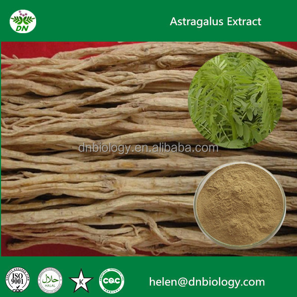 Popular Astragalus P.E. root extract powder 50% polysaccharides, Astragalus Powder Extract