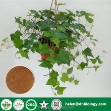 High quality 1% ~10% Hederacoside C Ivy Leaf Extract Ivy leaf