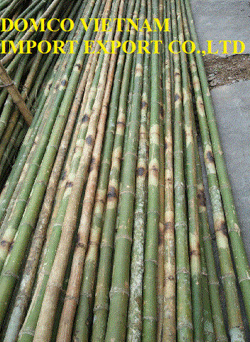 VietnamBamboo Pole-Vietnam,Natural raw , Sanded, Solid, Straight, Tam vong bamboo pole, Sell, Wholesale, -building construction