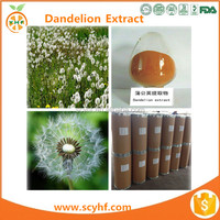 Super Dandelion Leaf Extract