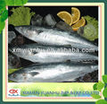 Frozen Spanish Mackerel king fish for sale