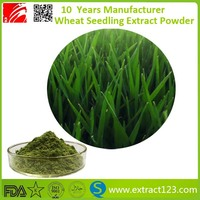 High Quality certified organic wheatgrass powder