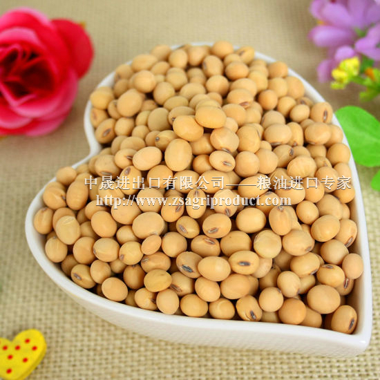 wholesale American / <strong>U</strong>.S. GMO soybean for oil with low price