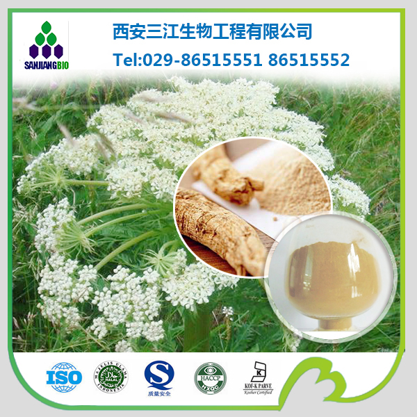Angelica P.E. Chinese Angelica extract