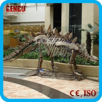 Skeleton stegosaurus model of dinosaur