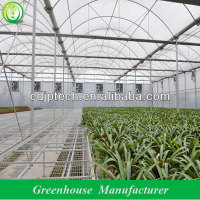 Multi Span Plastic Film Seedling Greenhouse