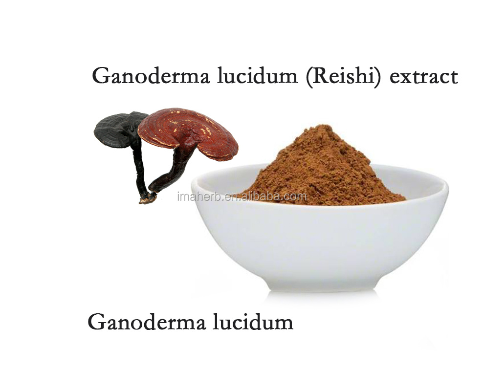Best Sell ISO Certified organic reishi mushroom extract powder