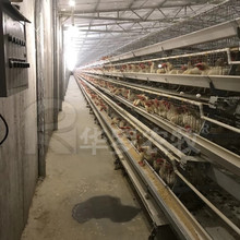 Poultry farming chicken house design business plan poultry crates equipment cages for broiler chicken
