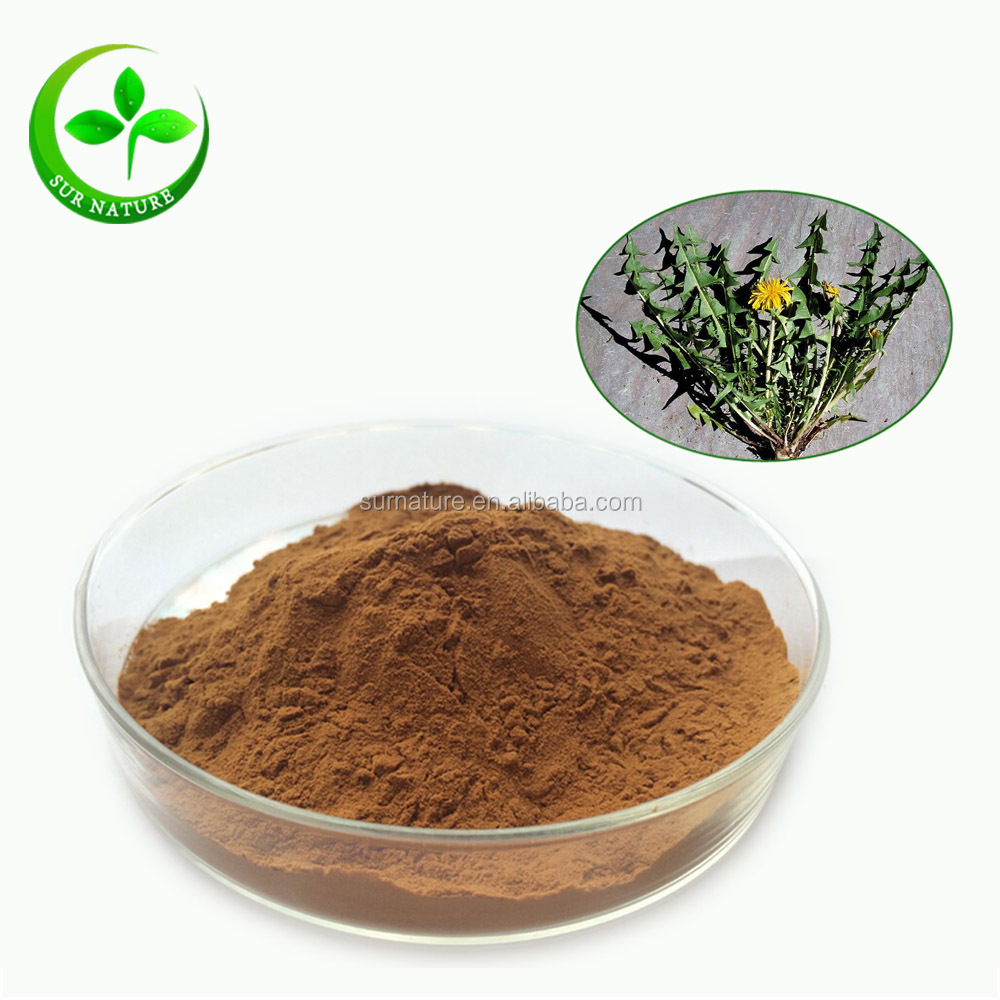 Best price pure natural dandelion root extract