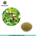 Organic Hippophae rhamnoides extract/Sea Buckthorn Fruit extract powder 5%~20% Flavones