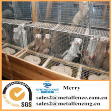 hot dipped galvanized wire breeding mink cages with wooden box