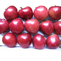 Fresh top red huaniu apples