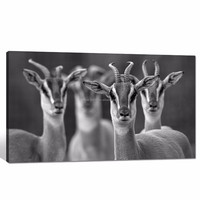 African Animal Canvas Wall Art/Deer Photograph Print on Canvas/Framed Black and White Poster