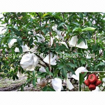 PP nonwoven fabric grow bag for agriculture