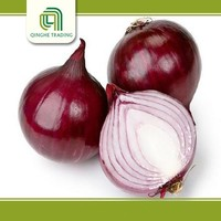 Brand new onion warehouse with low price