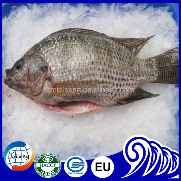 Iced Black Tilapia Whole Round Live Fish Farm For Sale