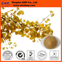 ISO Kosher GMP Qingdao BNP Supply High Quality Ginkgo Biloba Leaf Extract Rich in Flavone