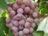 New crop chinese red globe grapes with best price