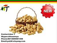 wholesale the best price ROASTED PEANUT IN SHELL 9/11