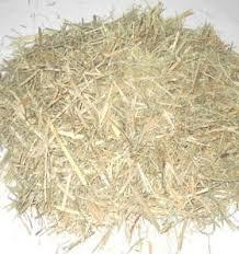 SUGAR CANE BAGASSE CHEAP PRICE