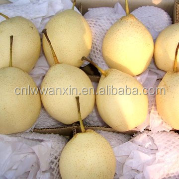 Super Ya Pear supplier