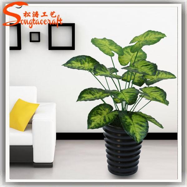 noms de plantes pots en plastique pour plantes plantes ornementales aquarium plantes jardin des. Black Bedroom Furniture Sets. Home Design Ideas