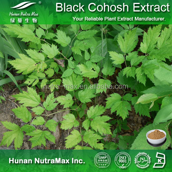 Natural Top Quality Herbal Ingredient Caulophyllum Thalictroides Extract Black Cohosh Extract Powder