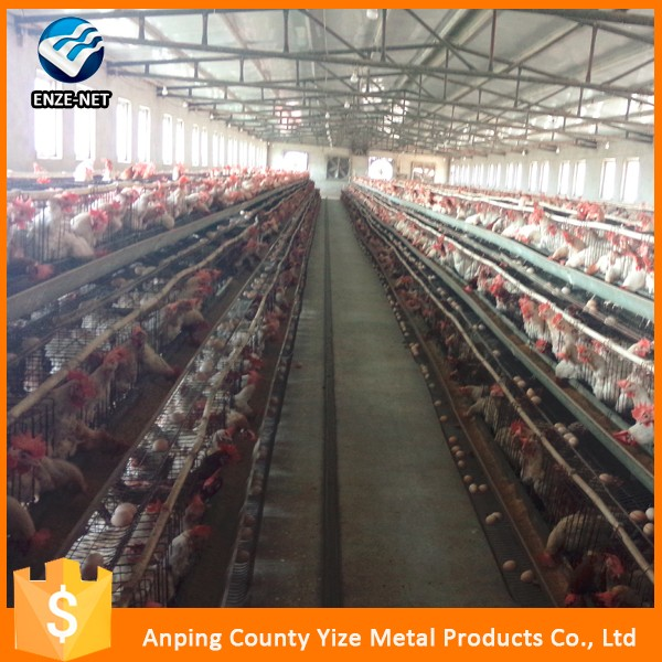Automatic layer chicken battery cage /layer egg chicken cage/poultry farm house design(Factory)