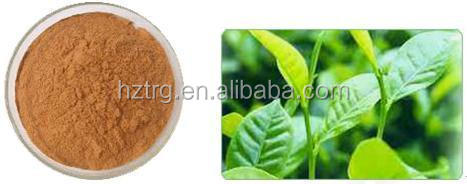 Top Selling green tea extraction polyphenols powder 50%-98% in China