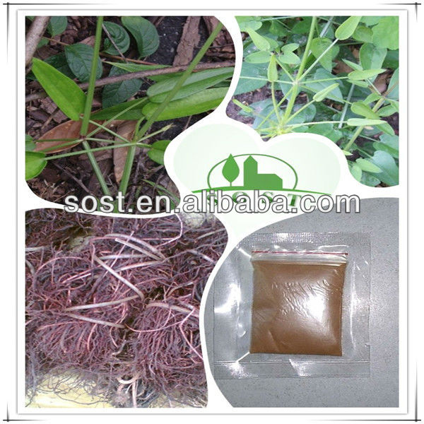 2013 new products herbal medicine rubia cordifolia