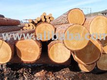 Larch log