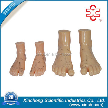 12CM Massage Foot Acupuncture Model